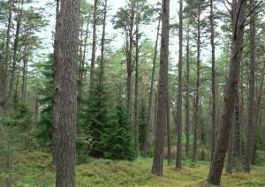 miško pirkimo priežastys