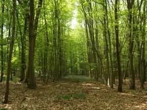 Miško pirkimas
