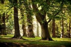 Stori medžiai